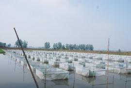 水产南片养殖区
