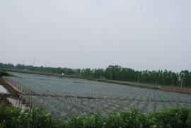 黄鳝苗种繁育基地