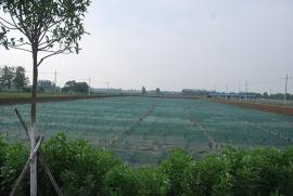黄鳝的繁育